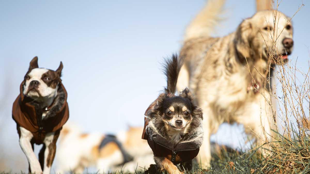 Steve Kaye unterstützt Menschen auf dem Weg mit ihrem Hund