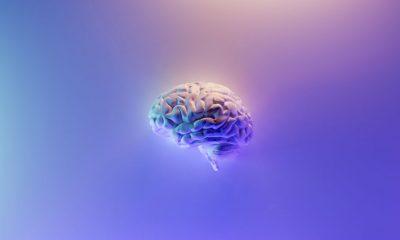 Gehirnleistung steigern